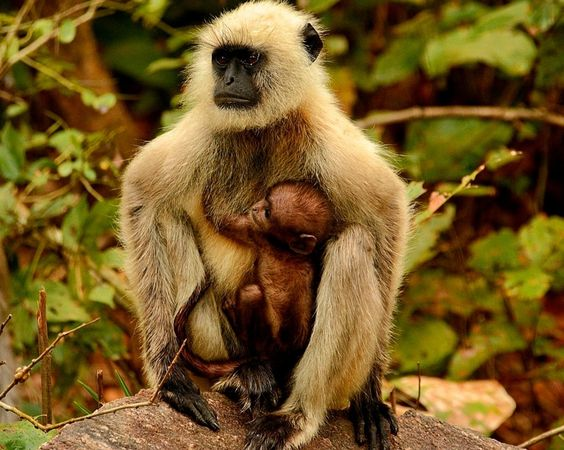"""""""Mother and Child"""" by Dave Scolnick: A mother and her infant rest along the road side in Kanha National Park in India."""