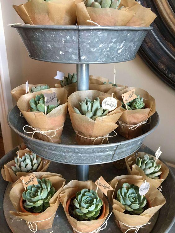 Petites plantes à offrir à vos invités