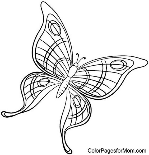 Butterfly Coloring Page 49 | Butterflies to Color ...