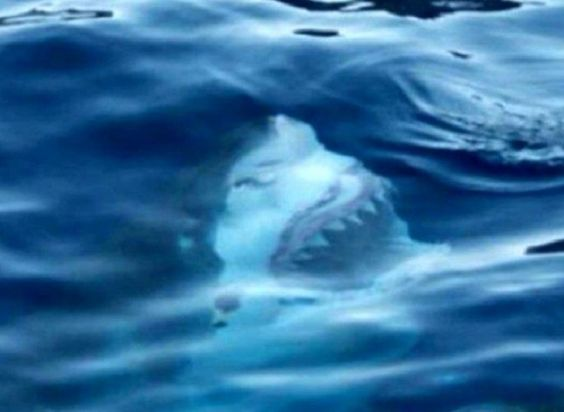 Fotos TERRORÍFICAS que te harán reconsiderar tu amor por el agua ¡Susto! ~ Nueva Mentes