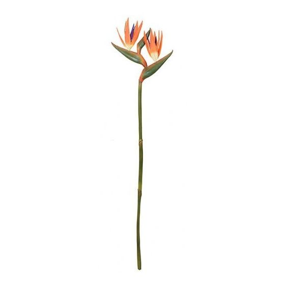 Mom's favorite flower—Bird of Paradise