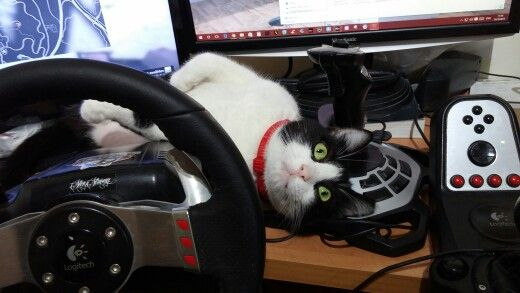 My cat  lives well, plays GTA V and has a Logitech G27 :)