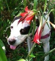My Angel dog from the Austin Humane Society.