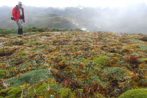 A friend walking across the wet paramo at 14,000 feet elevation in the Andes Mountains