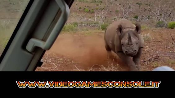 ➫➫➫ Rinoceronte incazzato attacca auto di turisti! ╰☆╮ Rhino angry attac...