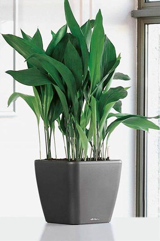 15 Top Pet Friendly Houseplants You Can Plant Indoors Indoor