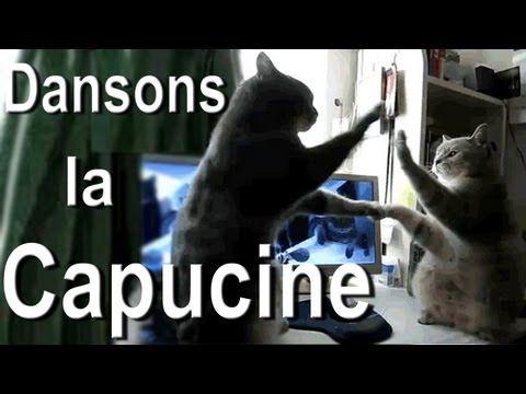 j'aime les chats, et je les aime BIEN quand ils sont francais :) (Funny French cat video...)