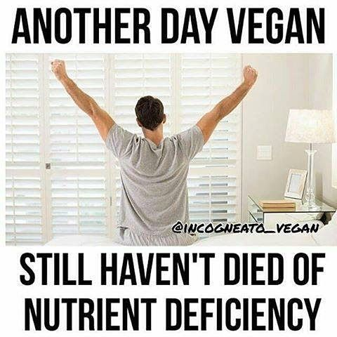 another day #vegan still haven't died of nutrient deficiency: