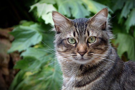 Cat Feline Feline Look Cat Eyes Pet Cats Kittens Kitten Photos Cats