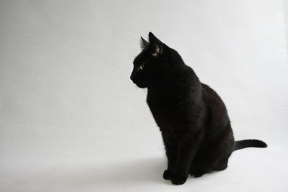 looks like my kitty! Midnight :)