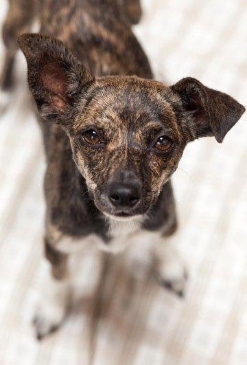 Greyhound Dog Adoption Los Angeles
