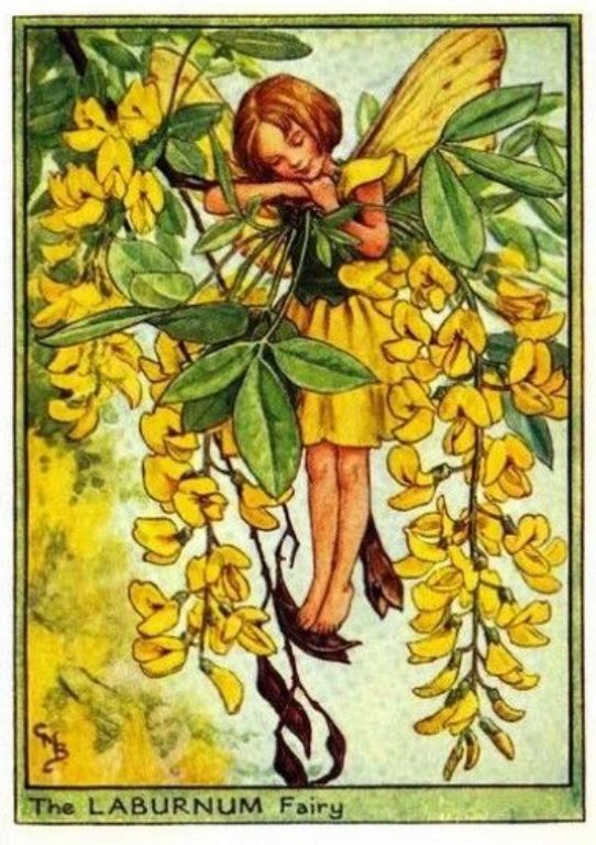 Laburnum Flower Fairy - by Cicely Mary: