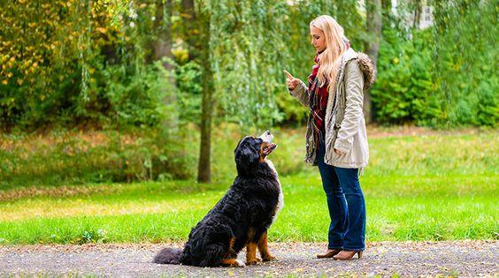 Hund hört nicht: In fünf Schritten zum sicheren Rückruf des Hundes