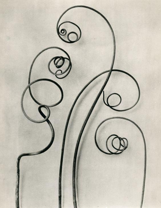 Karl Blossfeldt, Bryonia alba (White-bryony) b, © Karl Blossfeldt Archiv / Stiftung Ann und Jürgen Wilde, Pinakothek der Moderne, München