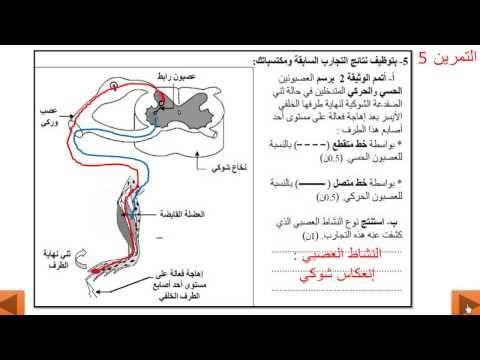 سلسلة تمارين الجهاز العصبي والجهاز العضلي Youtube