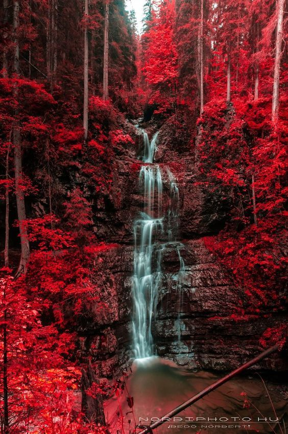 Untitled, Waterfall and blazing red autumn forest ,Austria by Norbi Bedő: