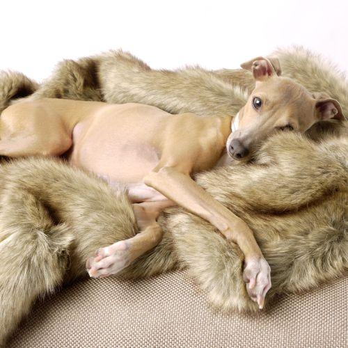 Charley Chau Faux Fur Luxury Dog Blanket Foxy