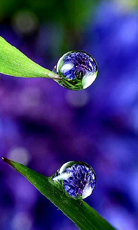 Pin By Ann Hughes On Water Drops With Images Dew Drops Water
