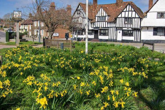 Codicote in Spring | Hertfordshire