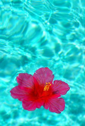Get fiji inspired with organic fiji skin care products for Floating flowers in water