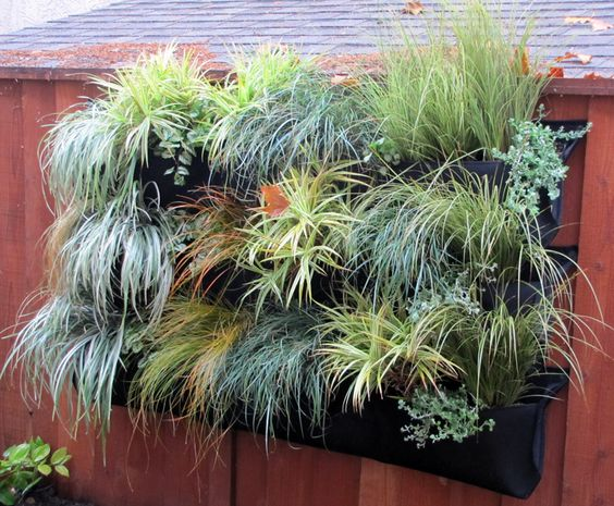 Carex living wall with Woolly Pockets - a project @Rebecca Sweet and @Susan Morrison  made for their book Garden Up!