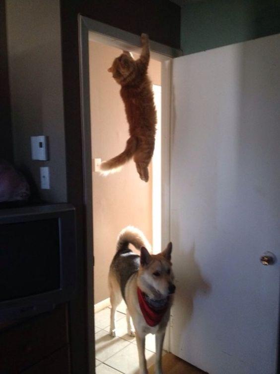 15 Gründe, wieso Katzen magische Lebewesen sind   1. Alle Katzen sind mit Ninja-Fähigkeiten ausgestattet     Die 14 weiteren Gründe gibt es hier zu sehen und zu lesen: http://www.watson.ch/Katze/articles/512574884-15-Gr%C3%BCnde--wieso-Katzen-magische-Lebewesen-sind