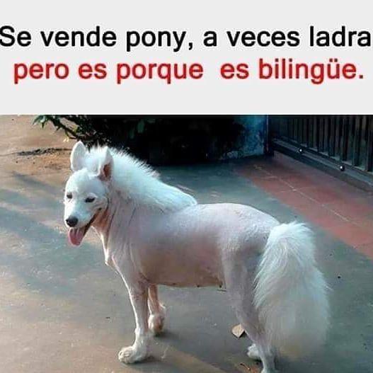 Https Ift Tt 2l74hbq Servicios De Taxis En Arroyo De La Encomienda Zaratan Simancas Rio Shopping Valladolid 34 Perros Graciosos Memes Perros Memes Animales