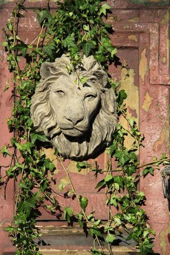 2012-10-26: lion