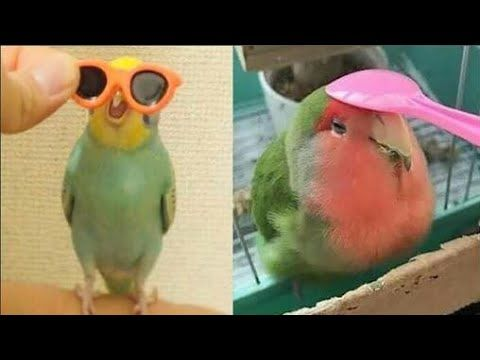 Funny Parrot Pictures