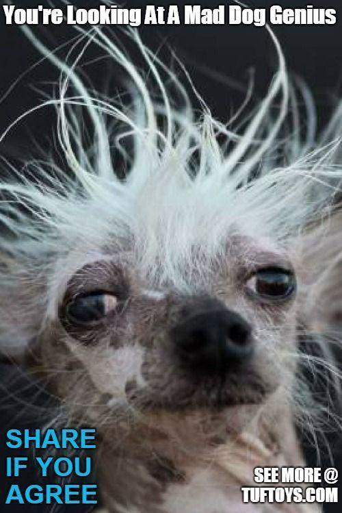 Pin On Funny Dog Memes