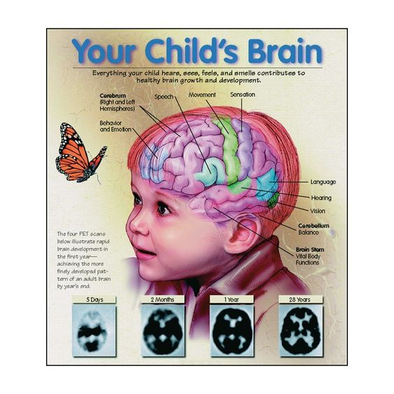 Infant-Child Brain Development: Did you know that positive social ...