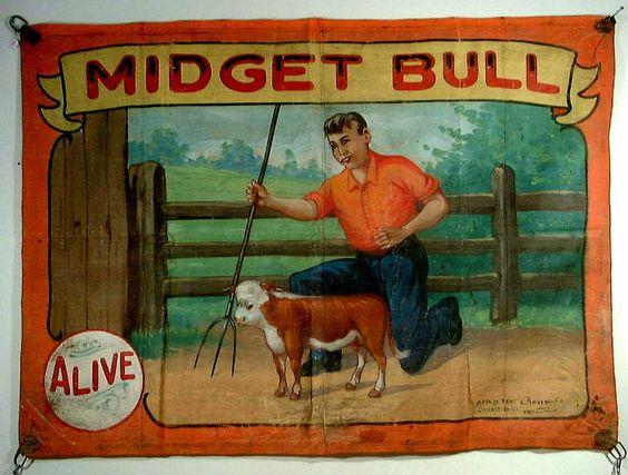 A miniature bull? No way!