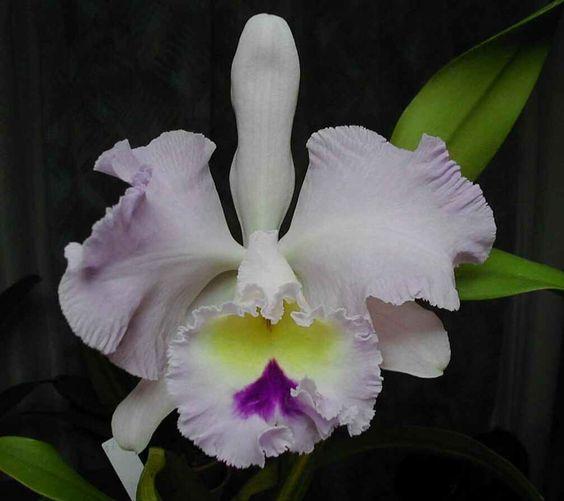 Orquideas Colombianas Imagenes | fotos de orquideas orquideas orquideas blancas orquideas colombianas ...