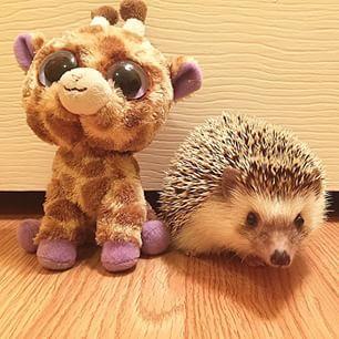 #hedgehogs #pancake #giraffe: