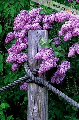 Lilacs - love the rope detail!