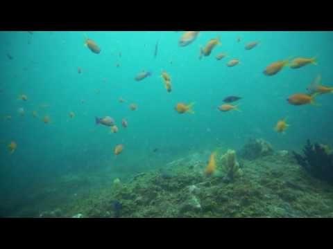 初心者も魚の群れを楽しむ!東京のダイビングスクールは常磐線亀有近く