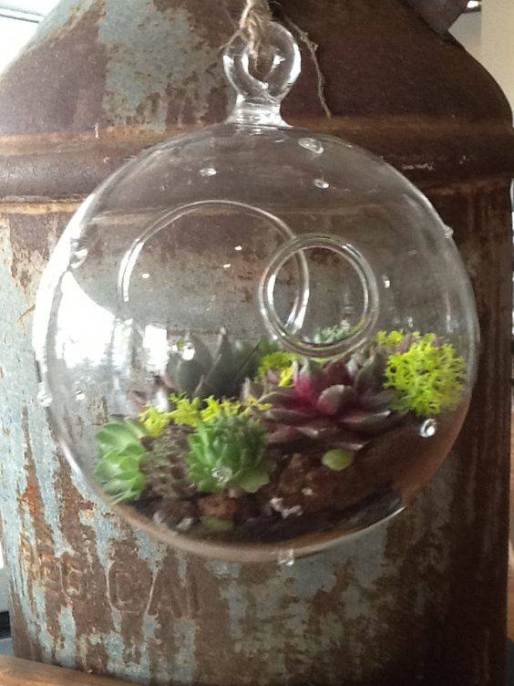 New hanging glass terrariums with little succulents and air plants included! More styles available, and air plants of many sizes also available for sale! Check them out!