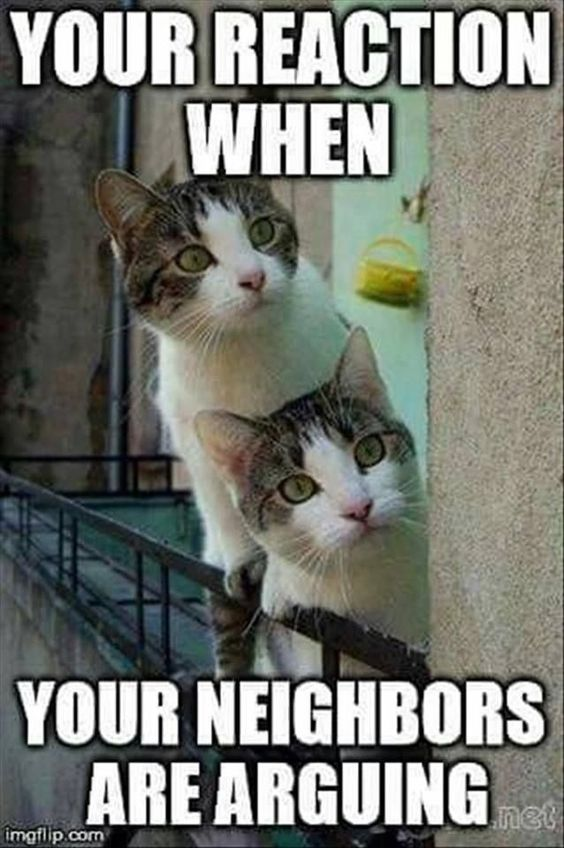 Lustige Tier Memes des Tages - 32 Bilder E9 - Lovely Animals World #catmemes #f ..., #animals #bilder #lovely #lustige #memes #tages #world