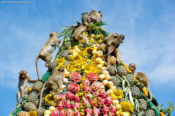 The Monkey Buffet Festival, Lopburi province, Thailand