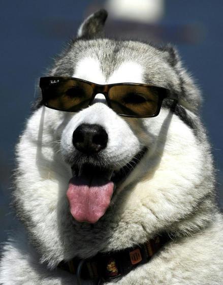 Sonne: Am Donnerstag können wir noch die letzten Sonnenstrahlen, so wie dieser Hund in Niederösterreich, genießen. Ansonsten war der Sommer 2014 aber der kälteste seit neun Jahren. Mehr Bilder des Tages auf: http://www.nachrichten.at/nachrichten/bilder_des_tages/ (Bild: apa)