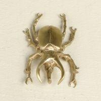 brass Atlas Beetle!