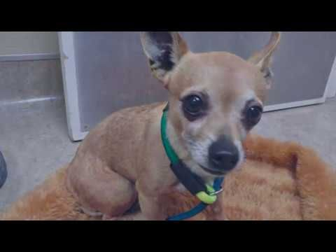 Help Save Scared Little Flint Just 6 Pounds And 4 Yr Old Asap Youtube Dog Care Rescue Dogs Dog Kennel