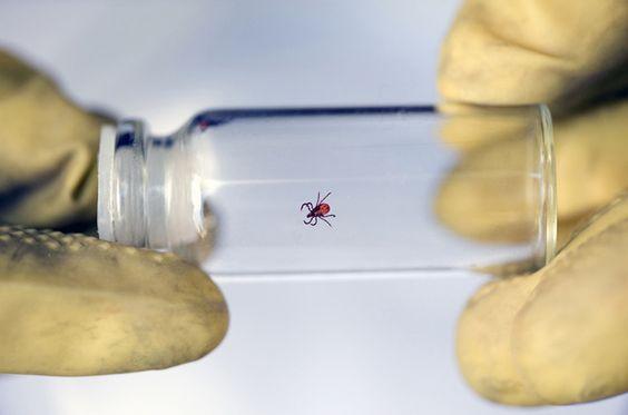 La Borréliose de Lymeest unemaladie infectieuse bactérienne qui pourrait bien être la pandémie de ce début du XXIe siècle.Petit à petit, au fil des recherches comme celles menée par le Pr Montagnier, Prix Nobel de médecine et découvreur du VIH, elle révèle toute sa complexité, pouvant aussi bien prendre l'allure d'une autre pathologie ou être …