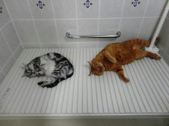 : Cat, Kiki