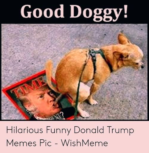 Funny Laughing So Hard Funny Wednesday Memes Funny Laughing Memes Wednesday Funny Friday Memes Funny Wednesday Memes Funny Dog Memes