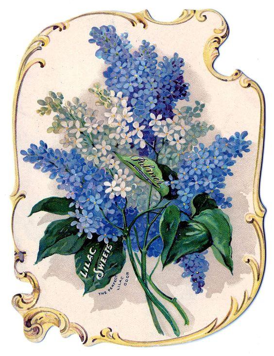Victorian Clip Art - Stunning Lilacs Perfume Ad
