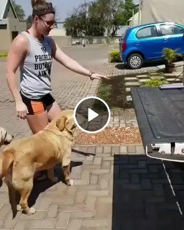 Meus 3 Cachorros são inteligentes