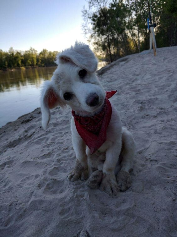 awwww-cute:  Pups first time at the river (Source: http://ift.tt/1pXCyVe)