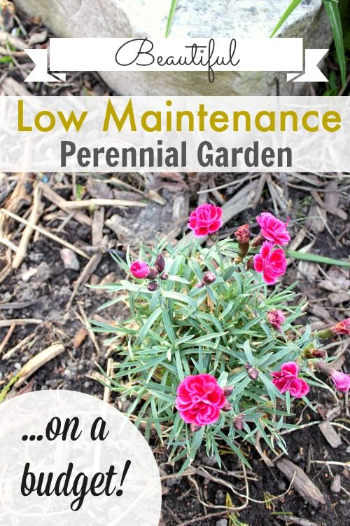 Gardens beautiful and perennials on pinterest for Low maintenance flowers outdoor