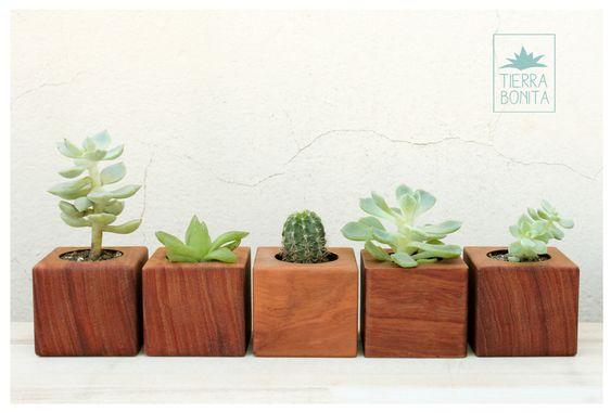 Minis and cactus on pinterest - Macetas de madera ...